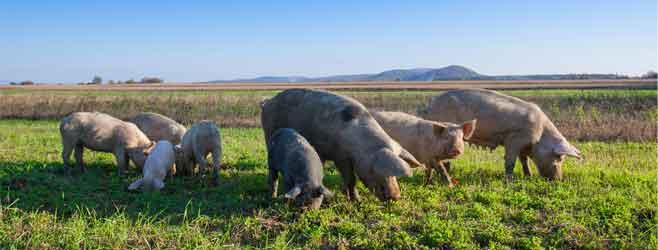 on farm feeding applications