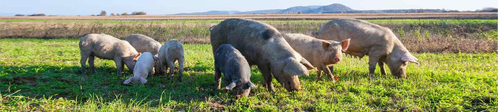 on farm feeding