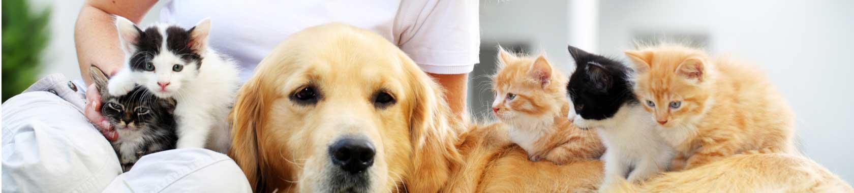 pet-food-general-dog-cats